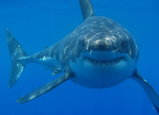 Lesson Plans Shark